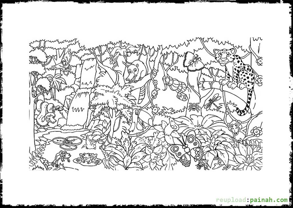 Rainforest coloring pages to download