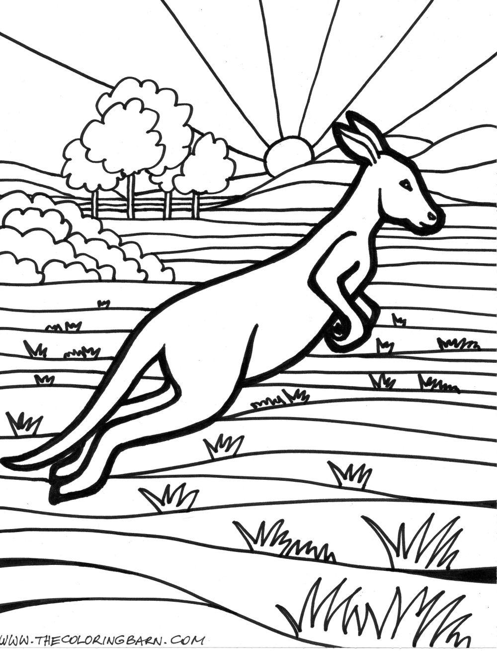 Free coloring pages kangaroo - Kangaroo Coloring Pages