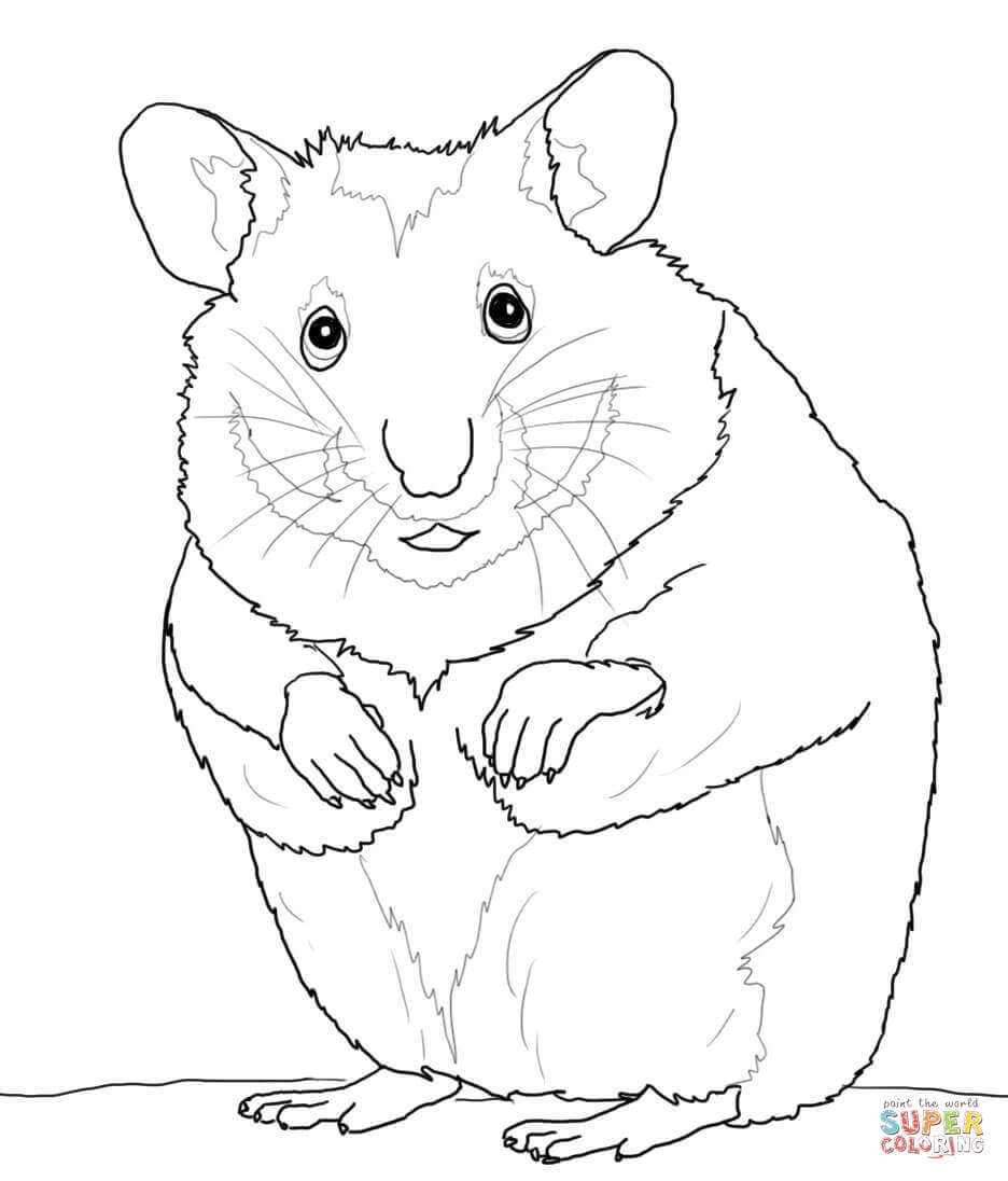 Hamster coloring pages to download and print for free
