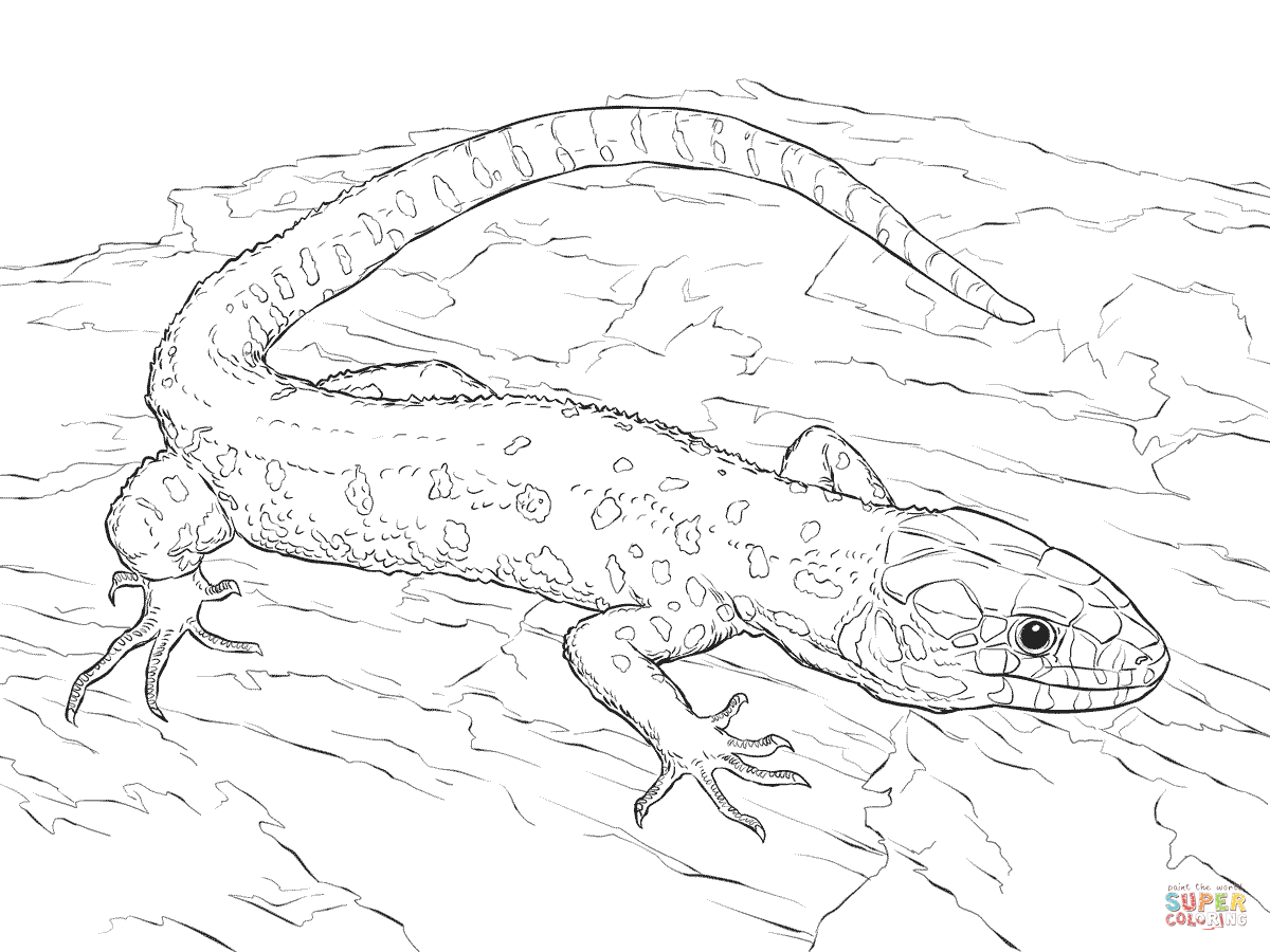 Lizard coloring pages to download