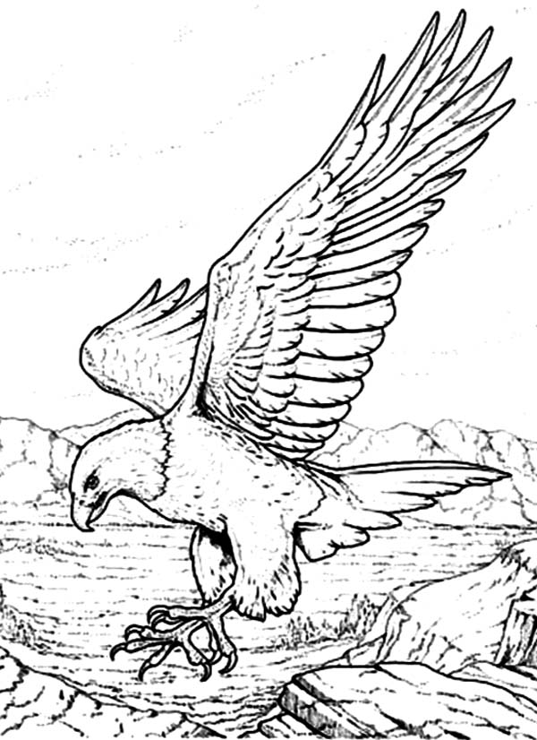 coloring page of an eagle - bald eagle coloring pages download and print for free