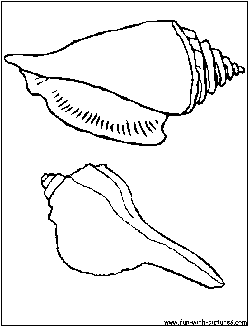 Beach shells coloring pages download