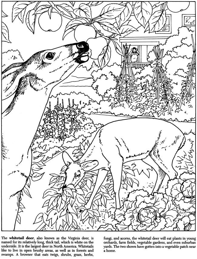 Nature coloring pages to download