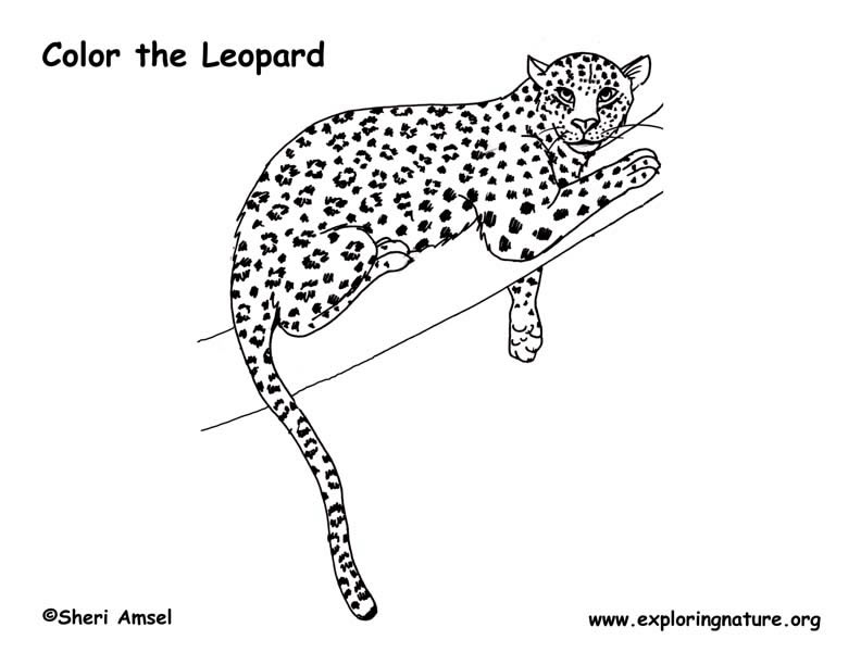 Leopard coloring pages to download and print for free