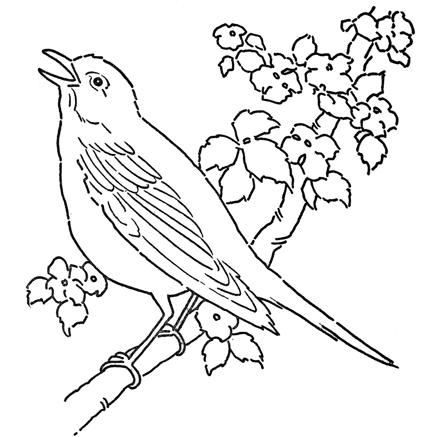 Bird coloring pages to download
