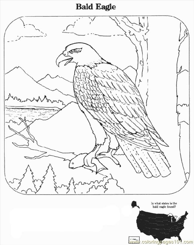 Bald eagle coloring pages download