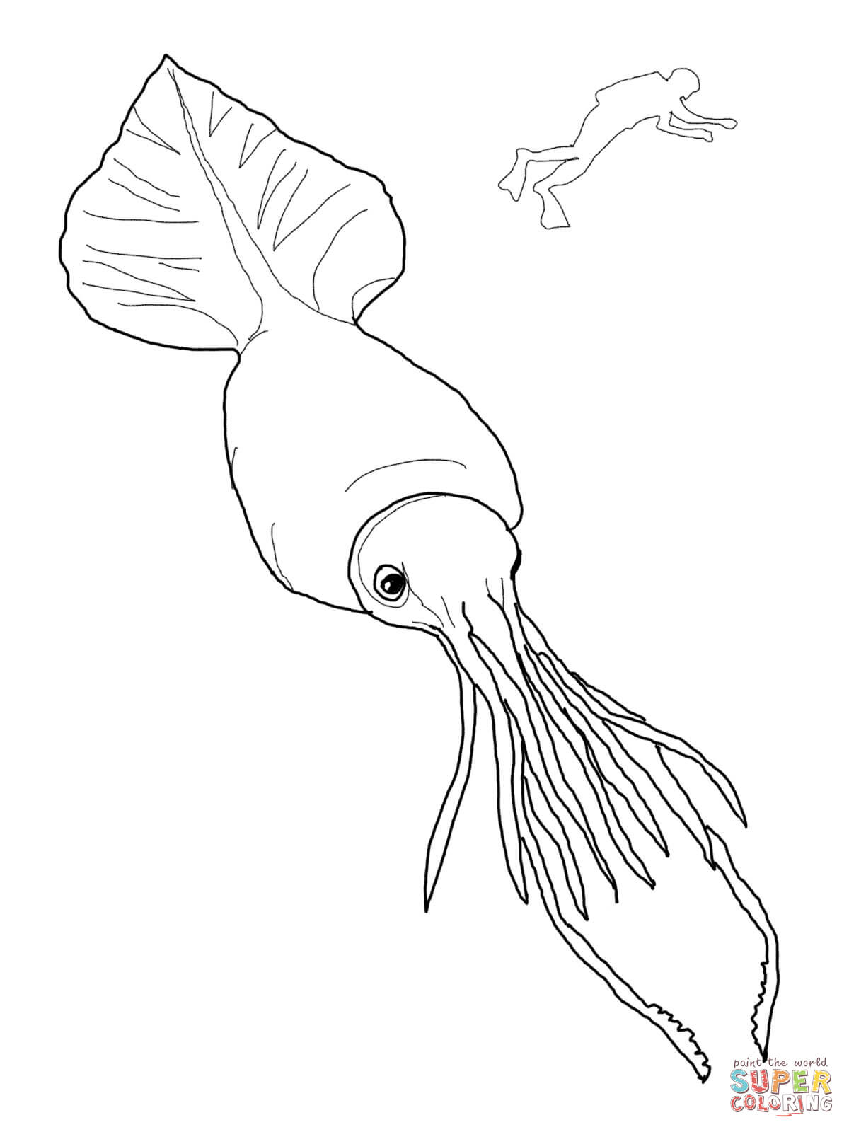 Squid coloring pages to download