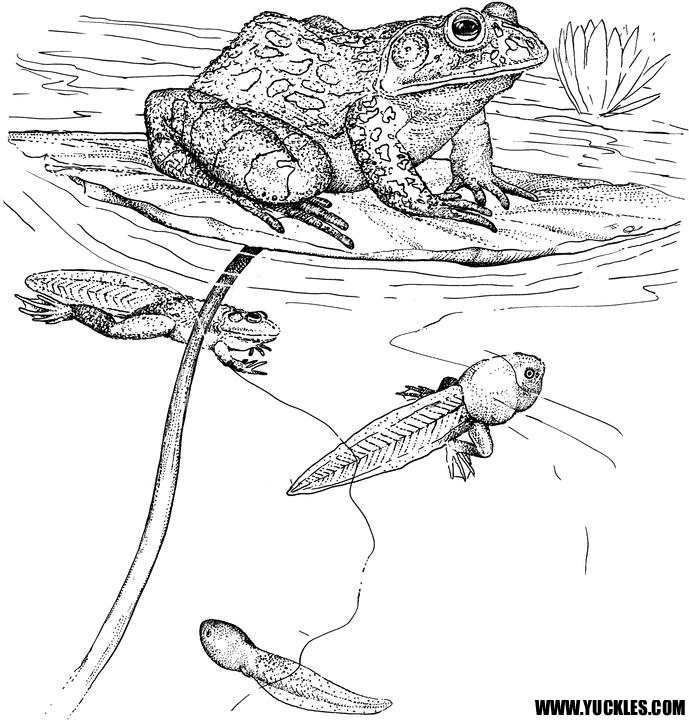 Reptile coloring pages to download and print for free