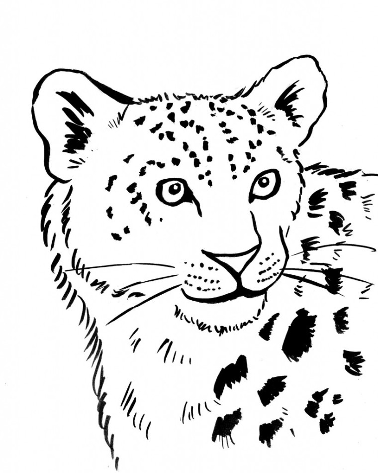 Leopard coloring pages to download