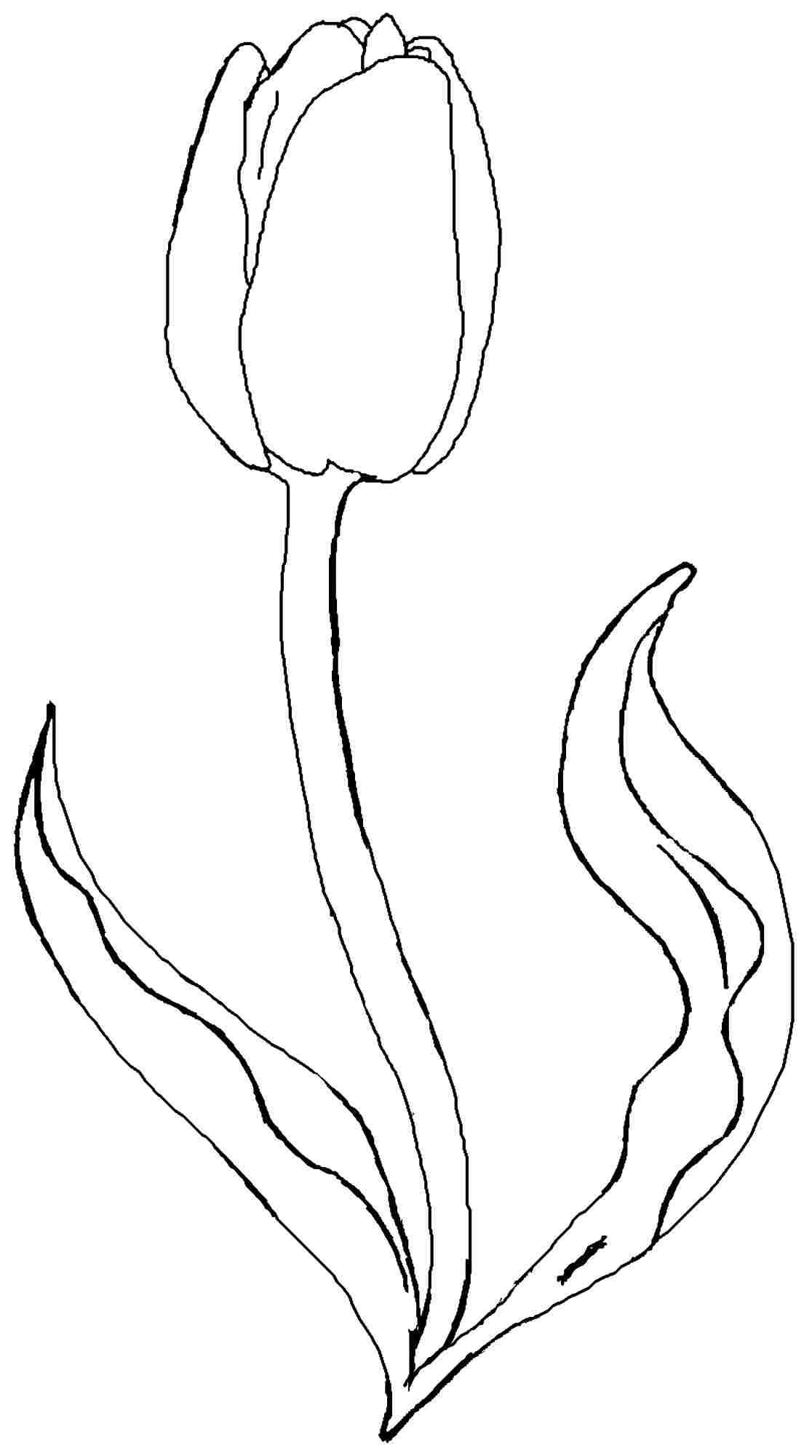 Tulip Coloring Pages To Download And Print For Free