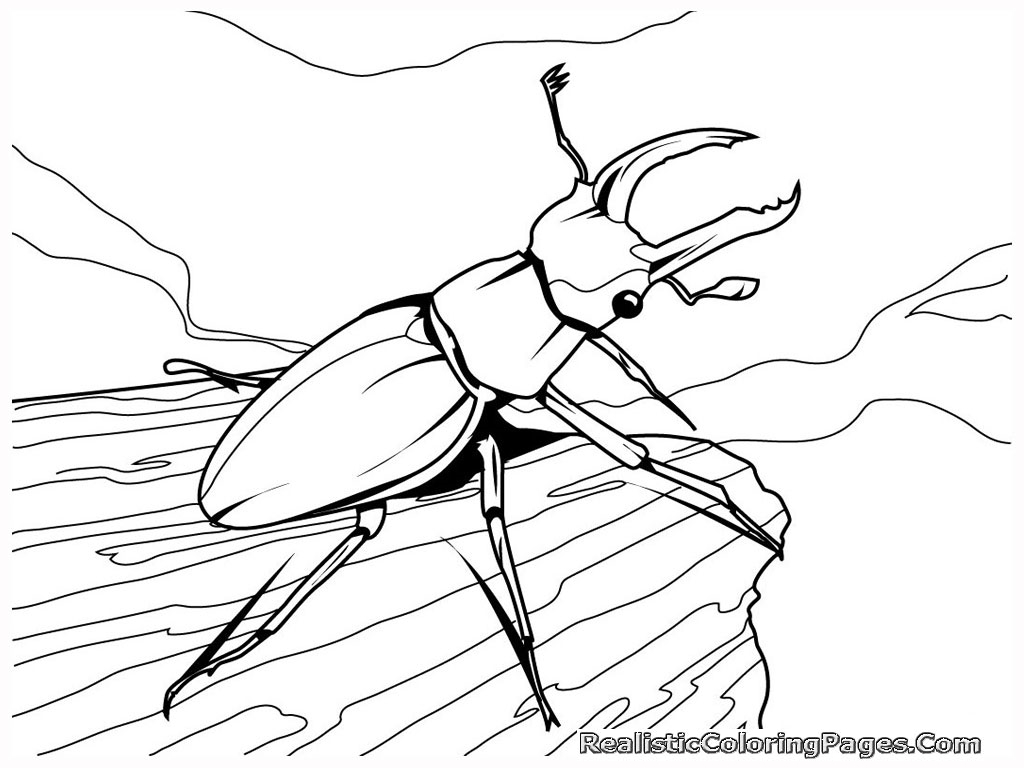 emejing rainforest insects coloring pages photos - printable ... - Rainforest Insects Coloring Pages