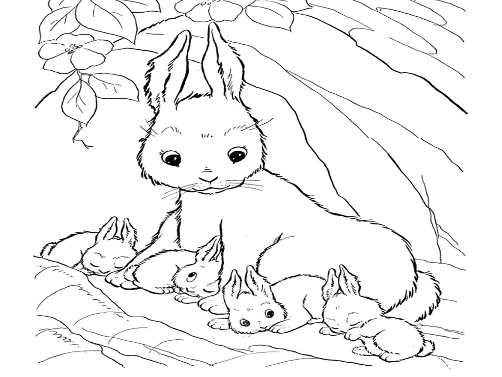 Bunny rabbit coloring pages to download and print for free