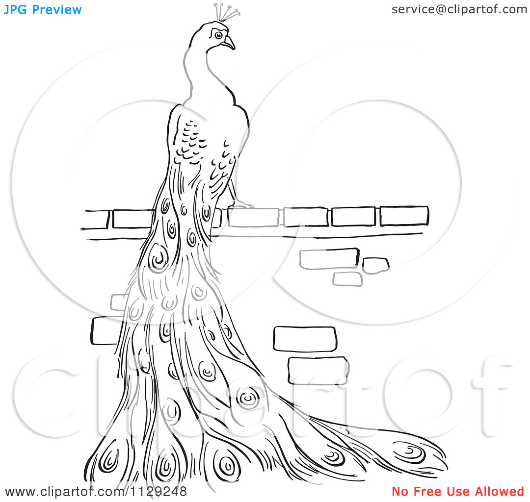 peacock feathers coloring pages download and print for free