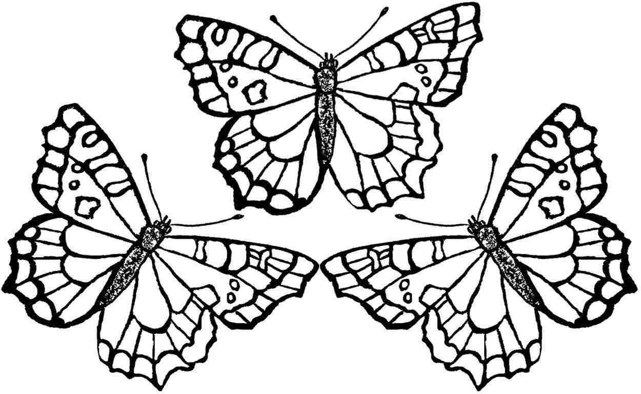 butterfly chrysalis coloring pages - photo#37