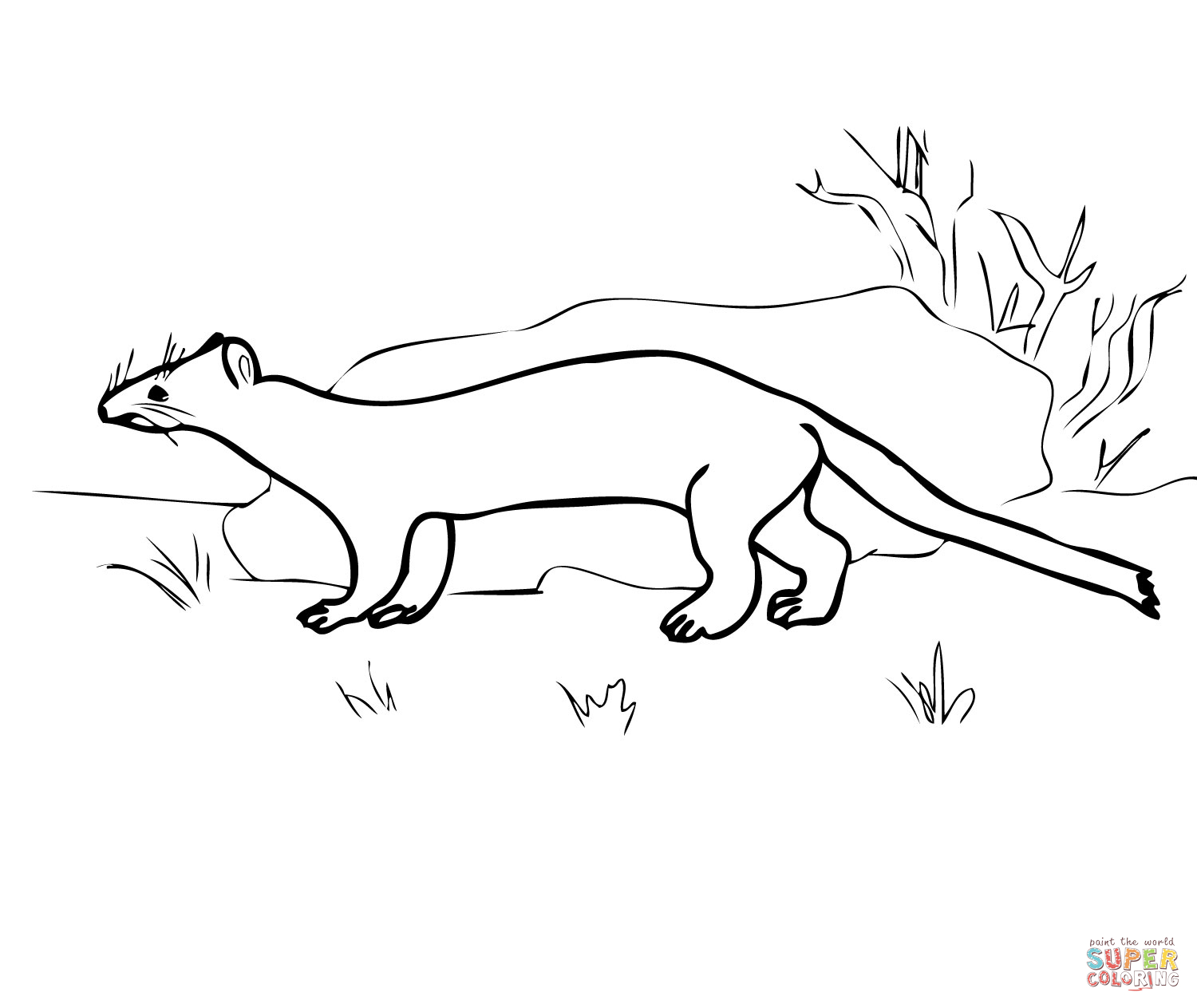 ermine coloring pages and print for free