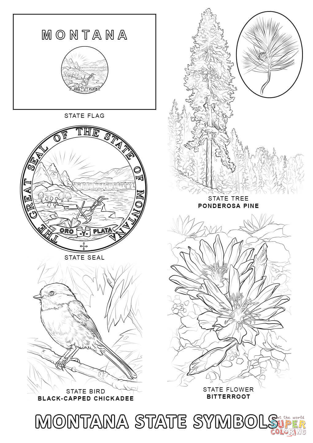 Montana symbols coloring pages download and print for free buycottarizona