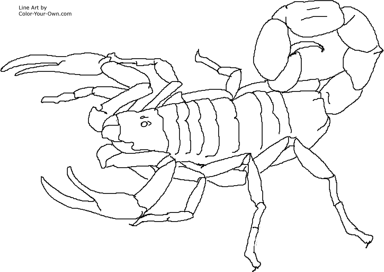 Раскраска для детей скорпион