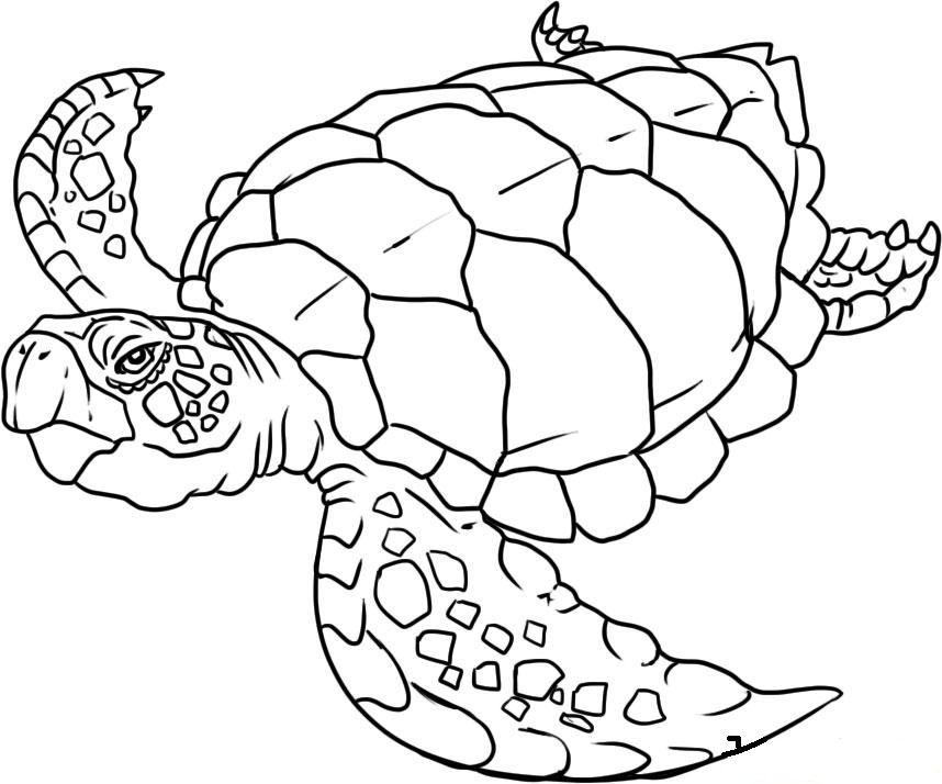 Sea life coloring pages to download and print for free