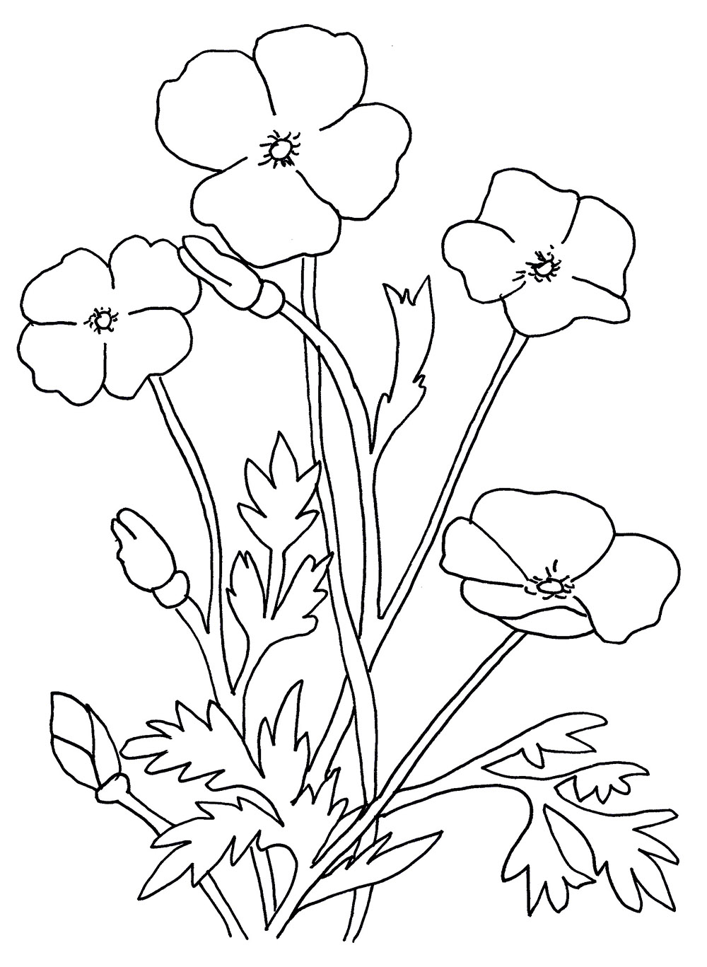 Adult Cute Poppy Coloring Pages Gallery Images cute poppy flowers coloring pages download and print for free gallery images