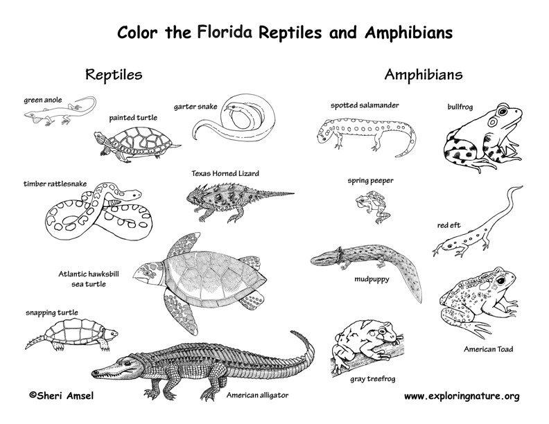 florida animals coloring pages - photo#6