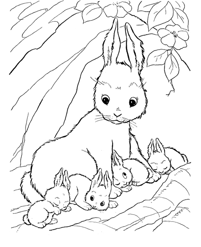 It's just a photo of Lucrative Baby Bunnies Coloring Pages