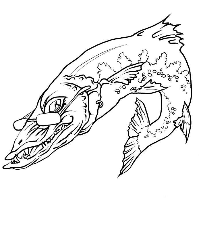Barracuda coloring pages download and print for free