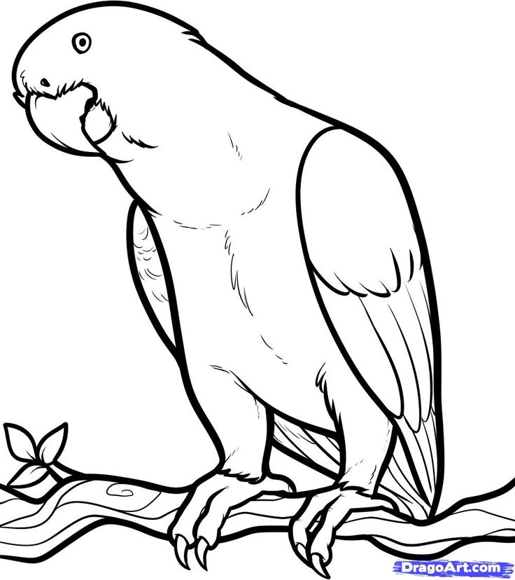 birds of africa coloring pages download and print for free - Africa Coloring Pages