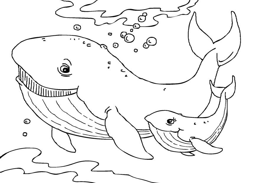 Whale coloring pages to download and print for free