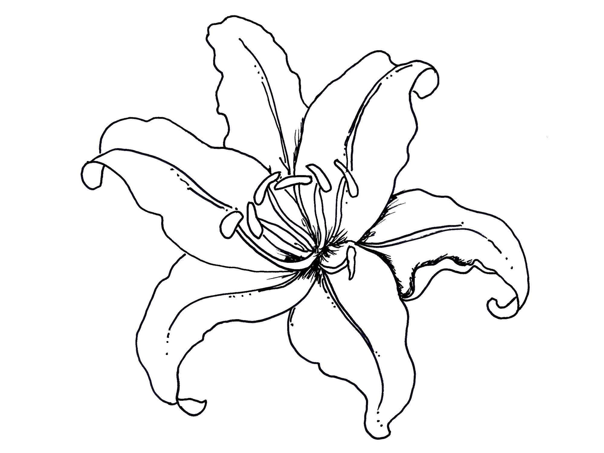 Coloring pages zinnia - Water Lily Flower Coloring Pages