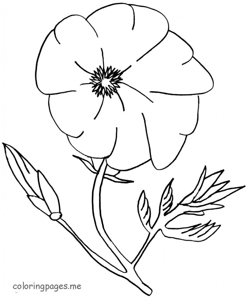 Poppy flowers coloring pages download