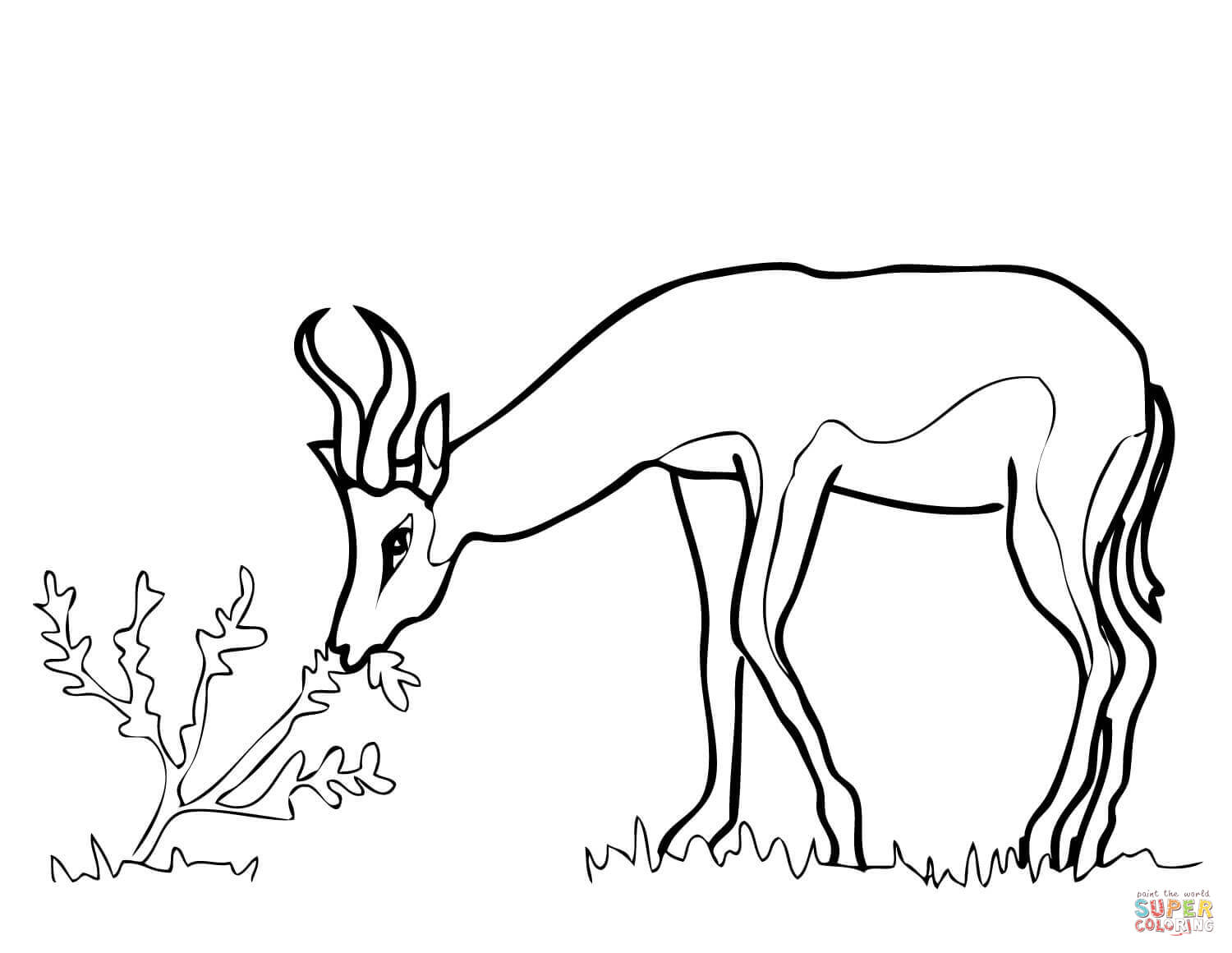 Colouring Pictures Of Springbok : Springbok coloring pages download and print for free
