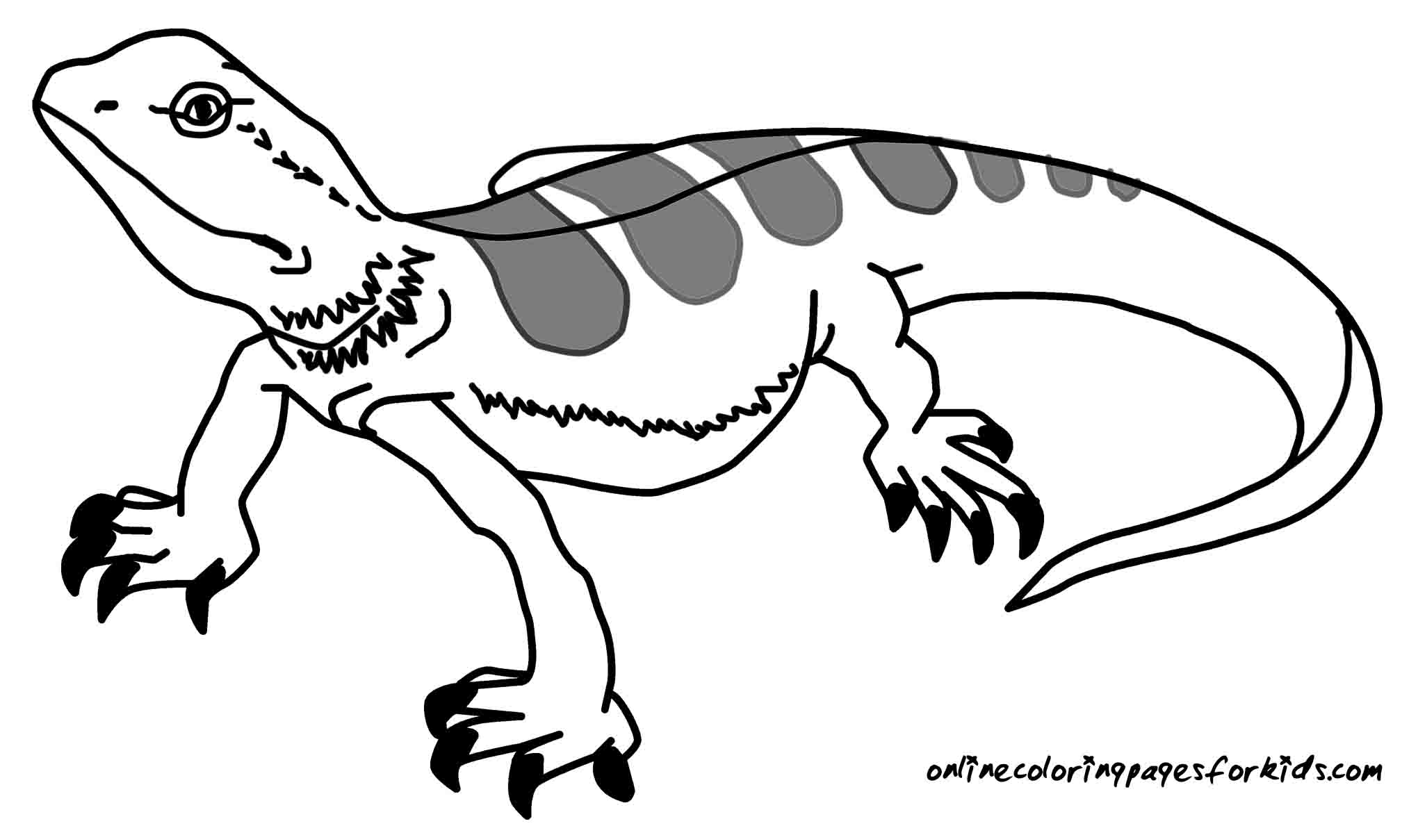 Reptile coloring pages to download and print for free for Lizard coloring pages