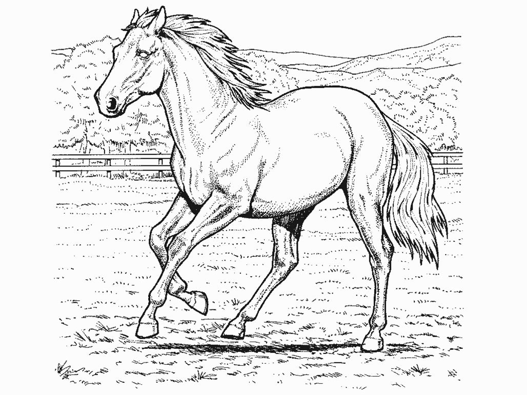 Realistic Coloring Pages Realistic Horse Coloring Pages To Download And Print For Free