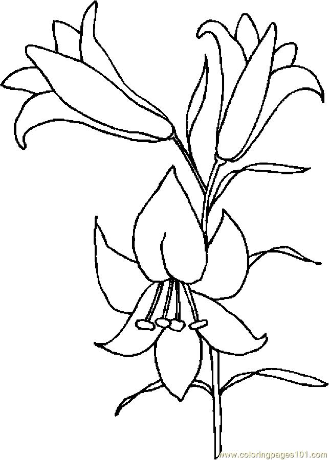 Lily Flower Coloring Page : Lily coloring pages to download and print for free