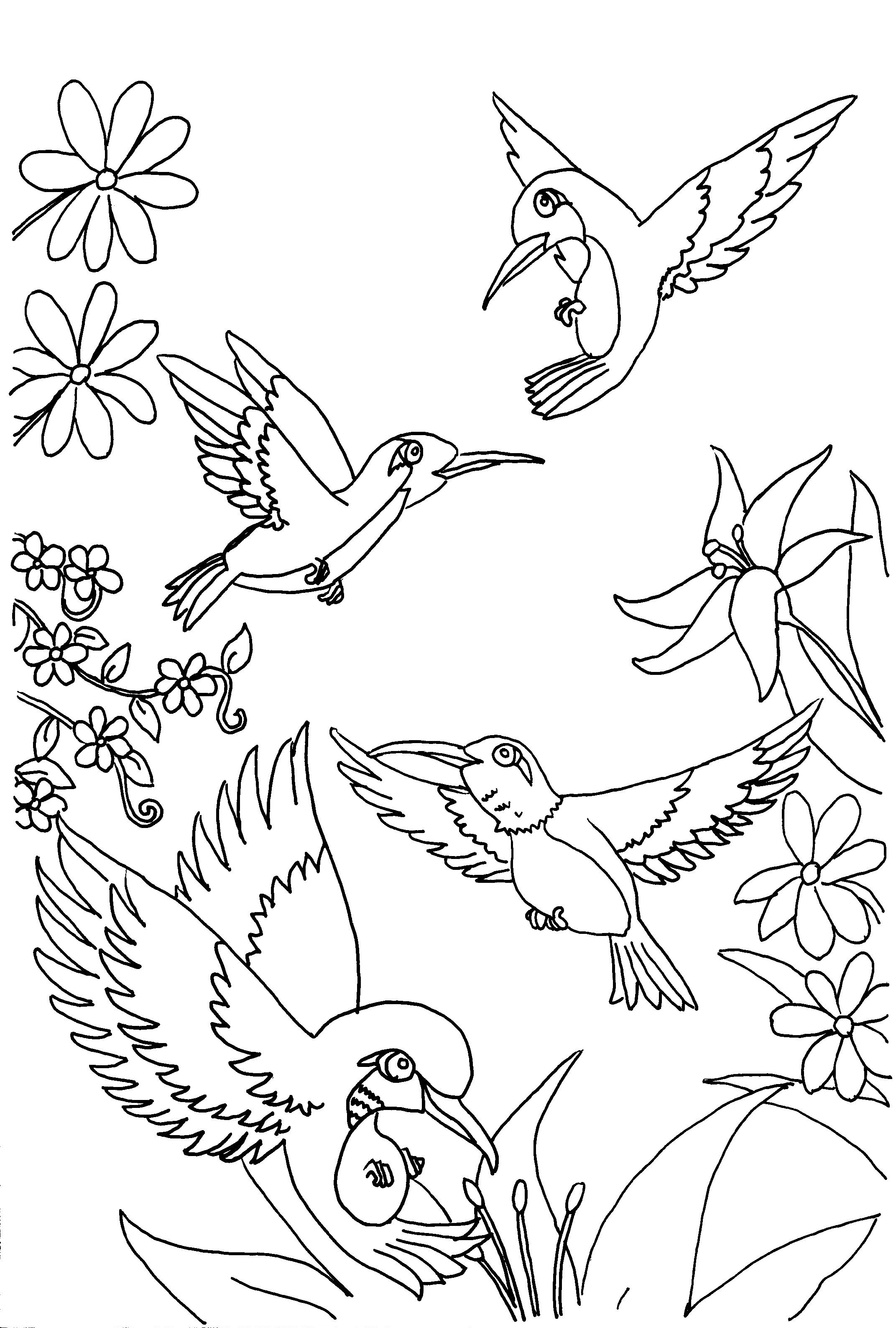 hummingbird coloring pages to download and print for free. Black Bedroom Furniture Sets. Home Design Ideas