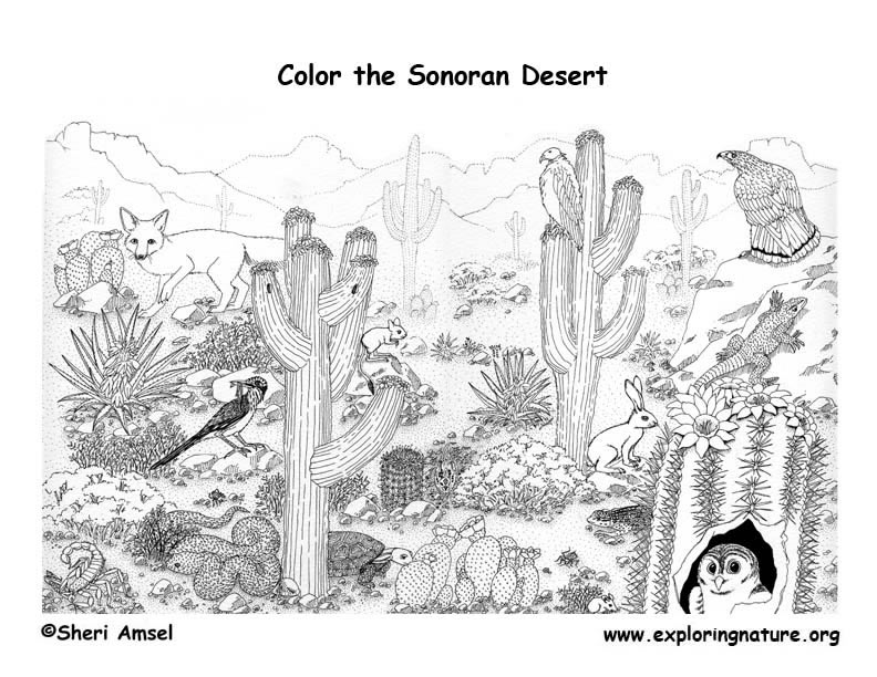 desert landscape coloring pages printable - photo#22