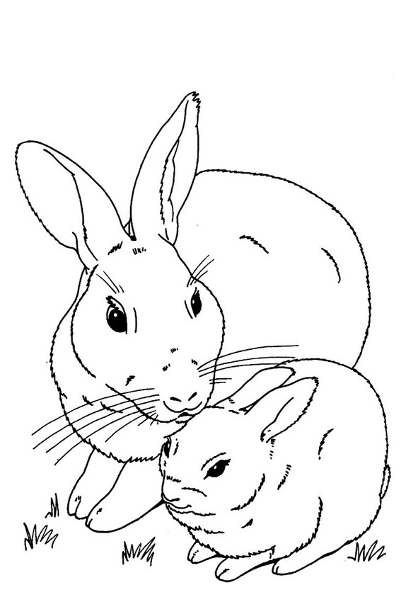 This is a photo of Trust Baby Bunnies Coloring Pages