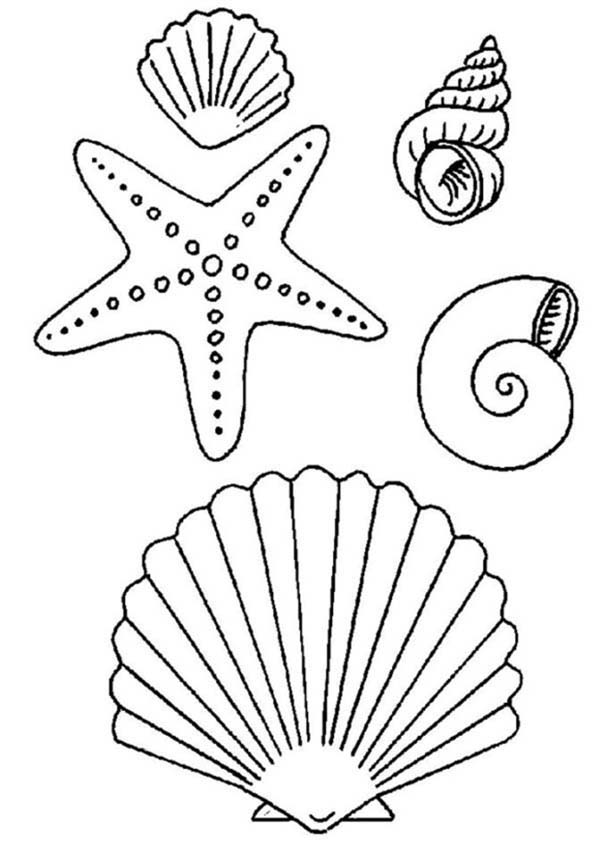 Seashell coloring pages to download and print for free