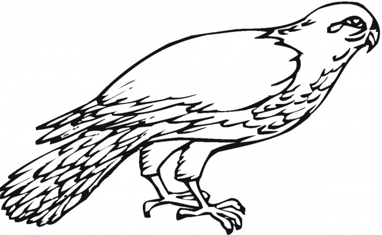 falcon coloring pages - photo#1