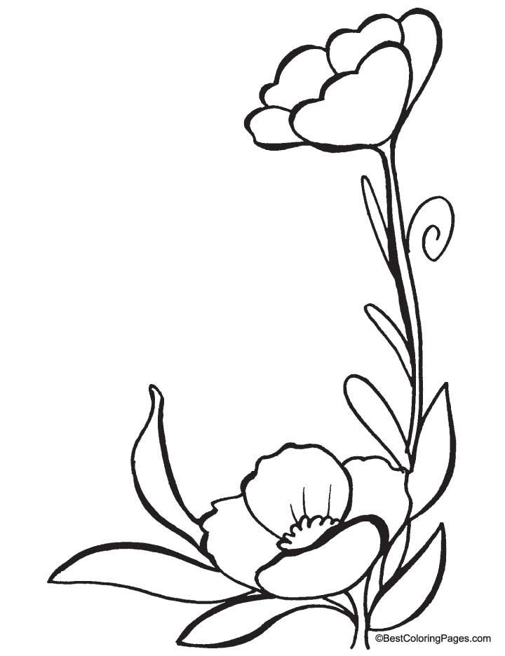 Poppy flowers coloring pages download and print for free for Poppy coloring page