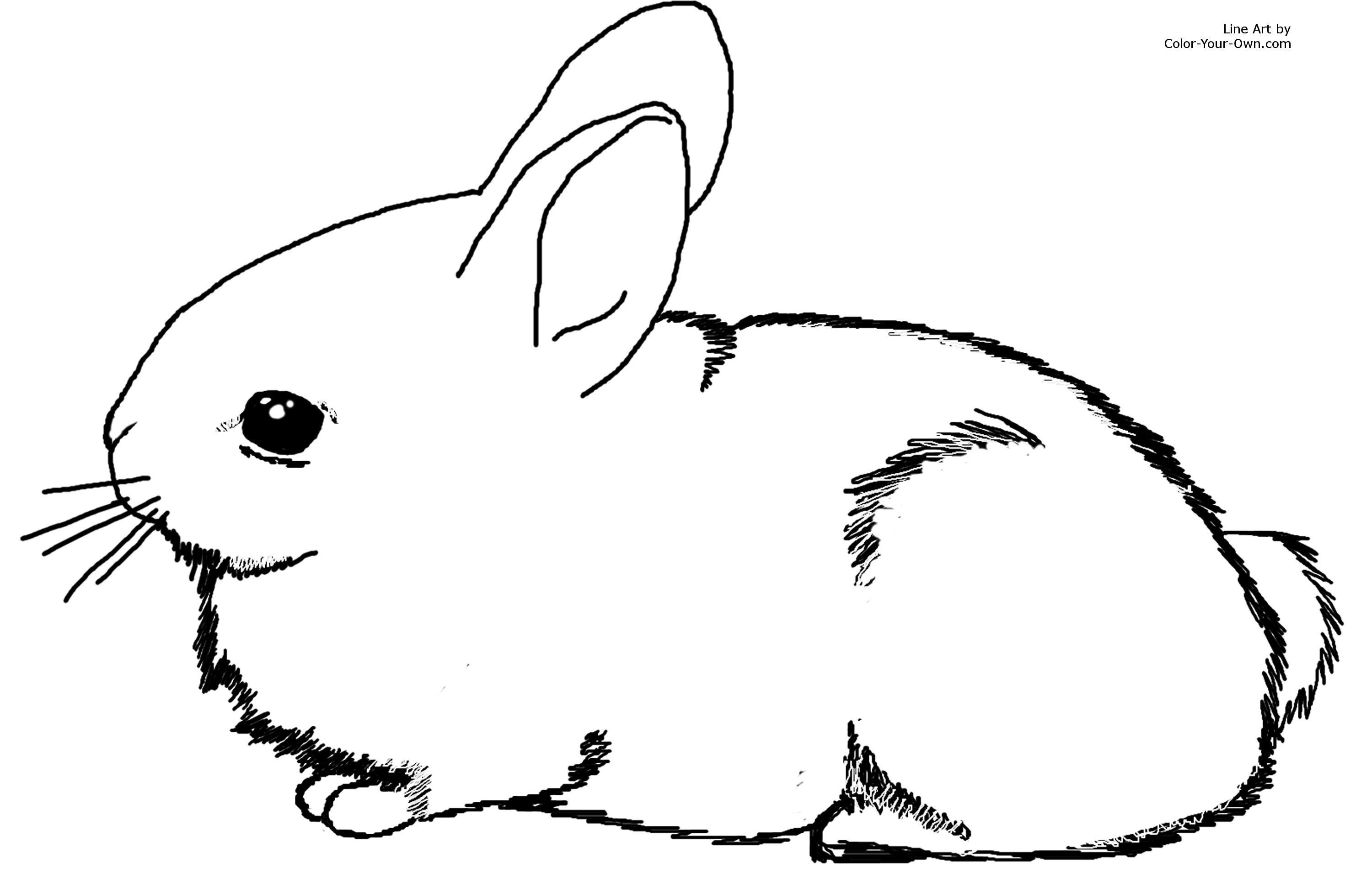 It is an image of Revered Baby Bunnies Coloring Pages