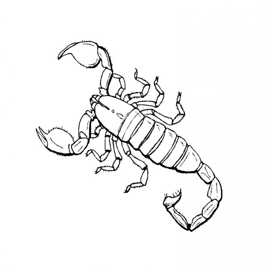 scorpion coloring pages - photo#16
