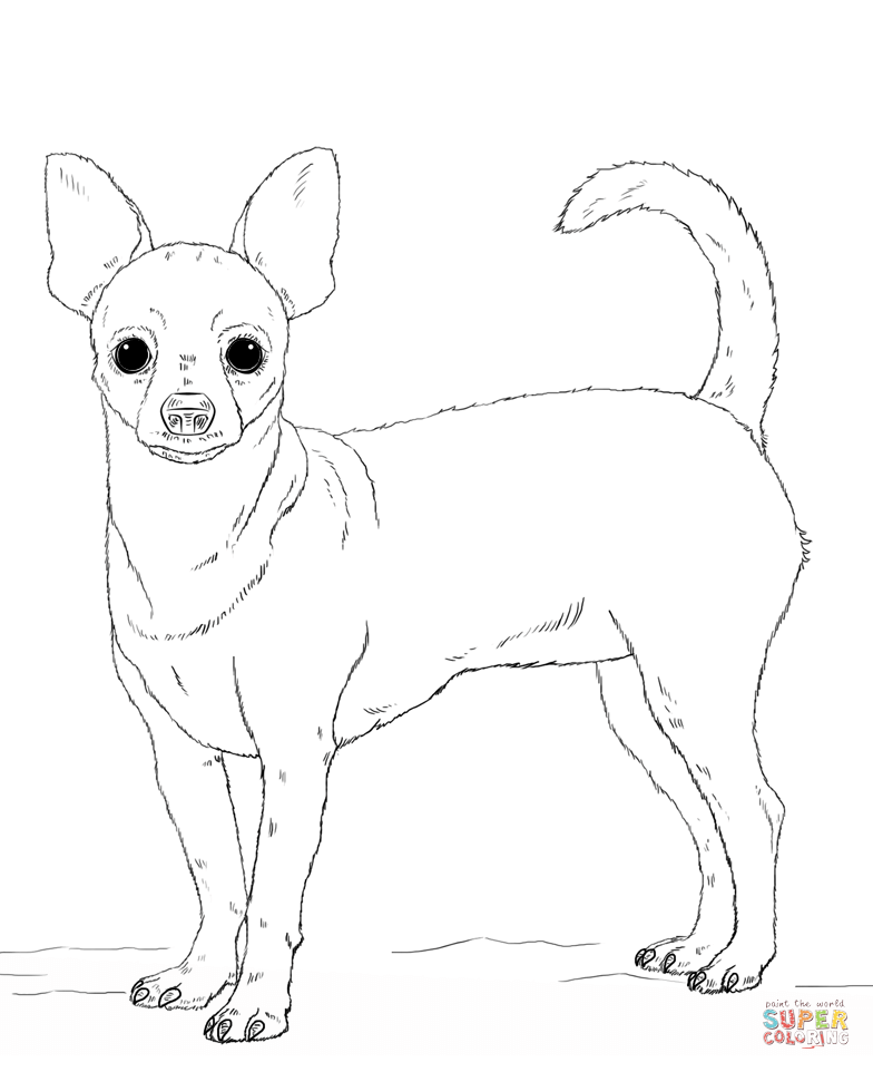 realistic puppy coloring pages - chihuahua dog coloring pages download and print for free