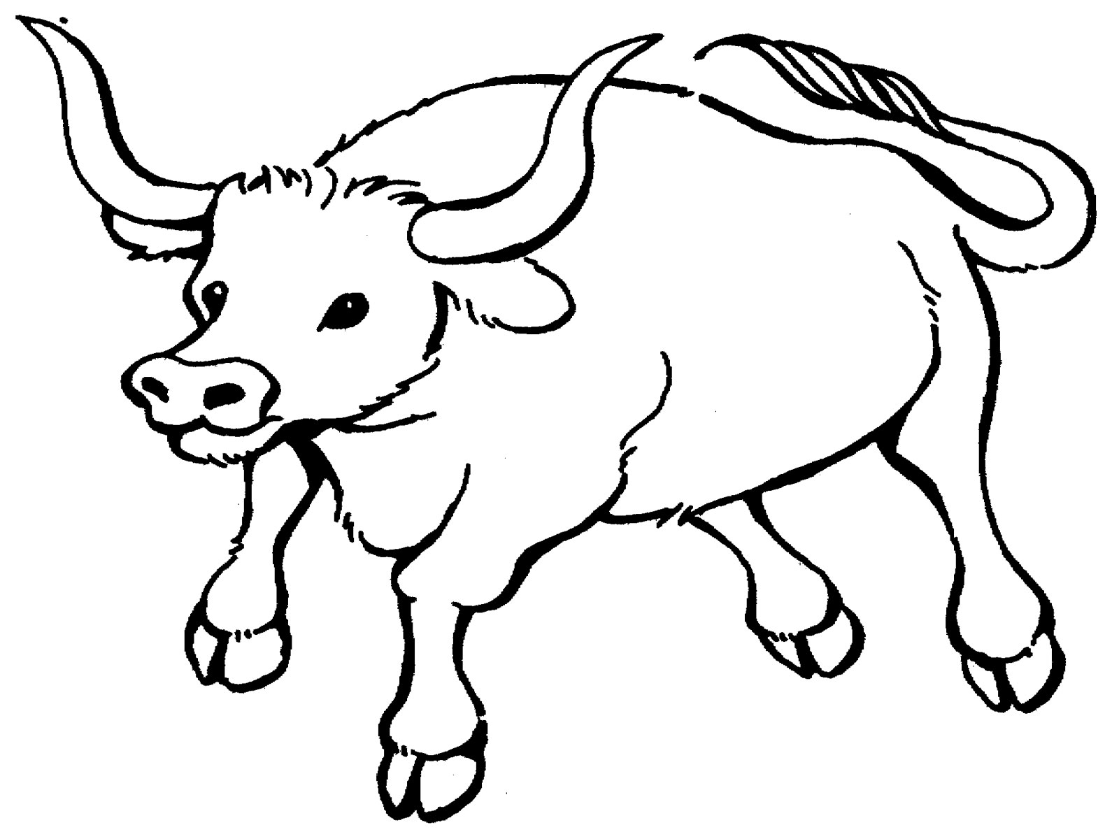 Adult Beauty Bull Coloring Page Gallery Images beauty bull coloring pages to download and print for free images