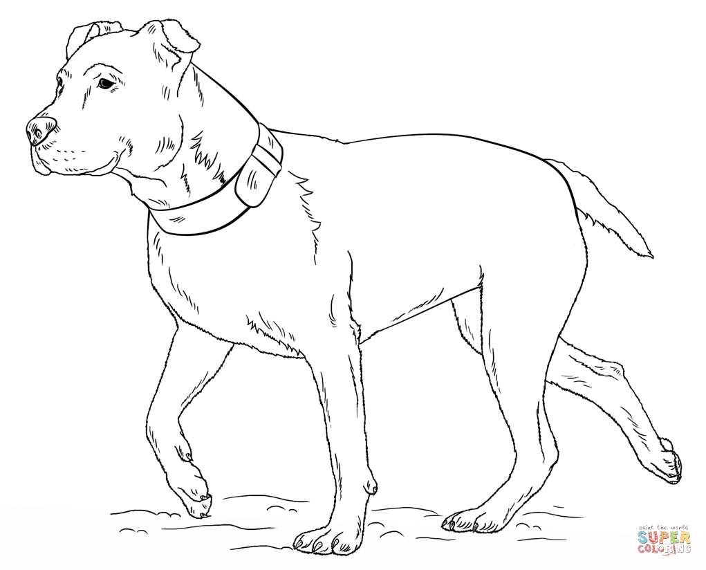Free Pitbull Color Pages Coloring Pages