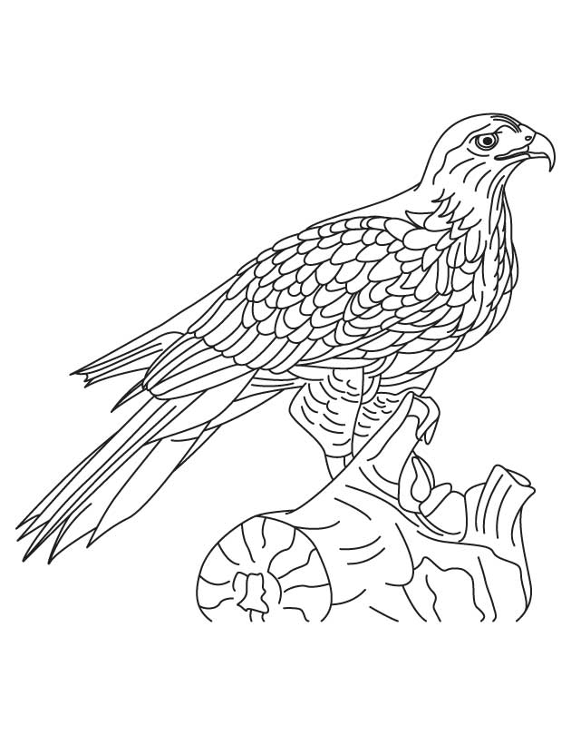 Hawk coloring pages to download
