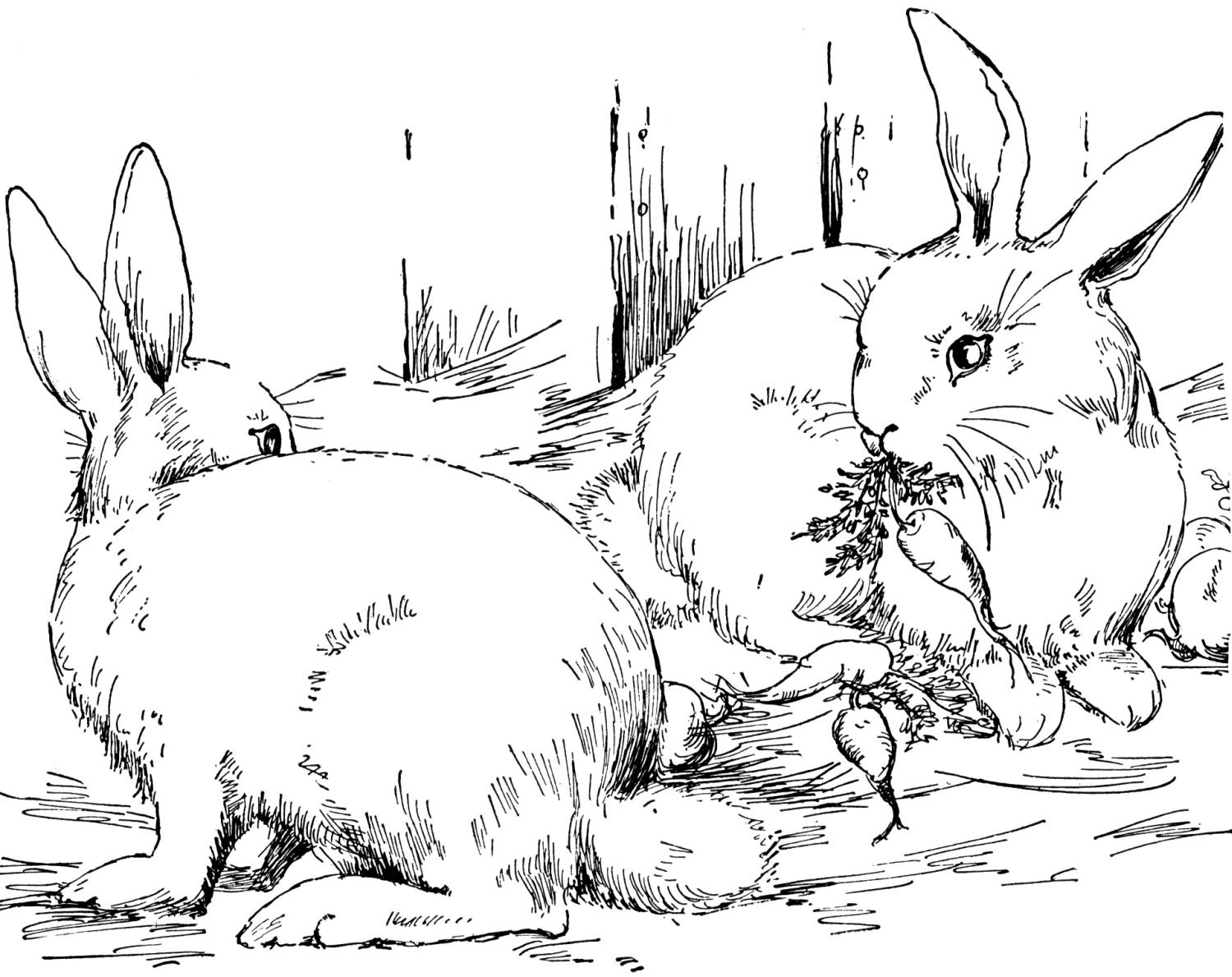 Real bunny coloring pages download