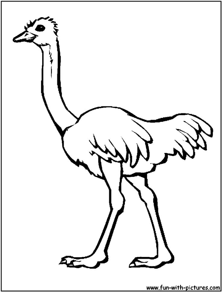 Birds of africa coloring pages