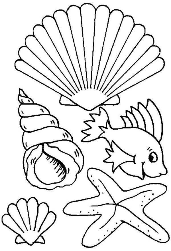 seashell coloring pages - photo#18