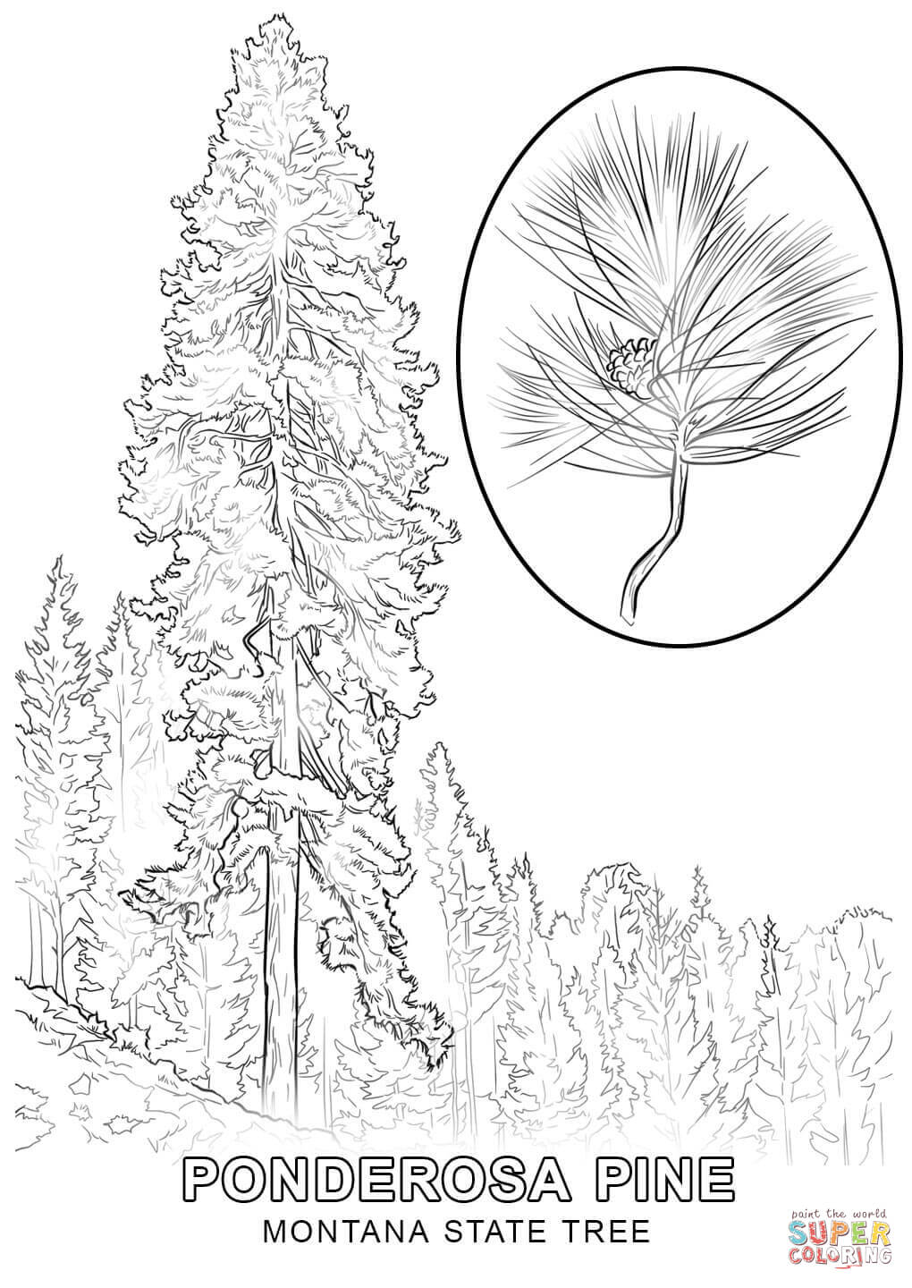 Montana symbols coloring pages